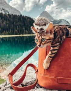 mačka i jež