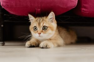 mačka mačke